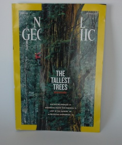 The power and majesty of a redwood enhances the visual branding of Nat Geo, even as it obscures its logotype.